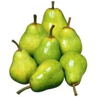 pear-dutchess